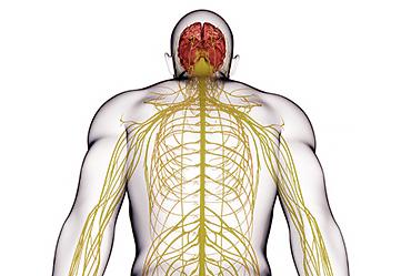 Заболевания центральной нервной системы